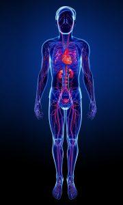 ecodoppler vascular